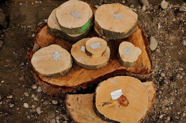 Etude arbre